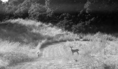 deer with fawn in meadow photography-country woman studio